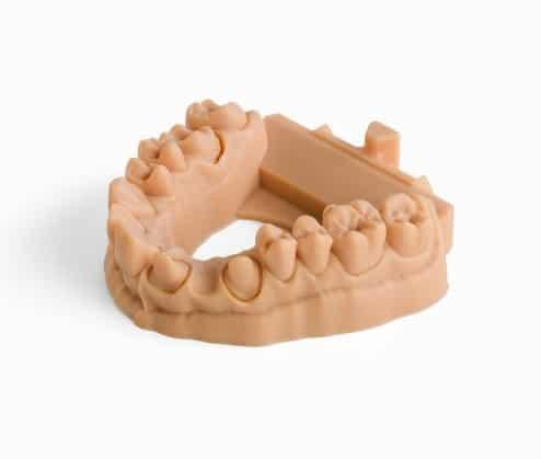 Dental Model 2x 3